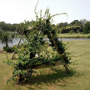 Swing Set with Confederate Jasmine Vine